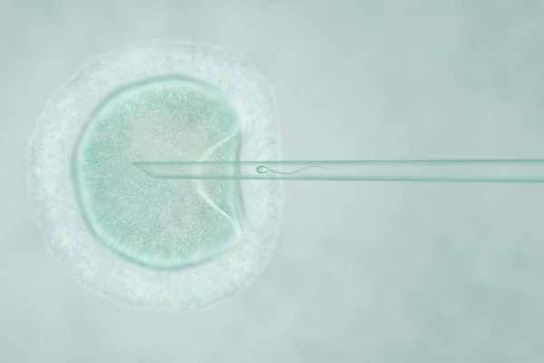How Are Embryos Placed in IVF Treatment?